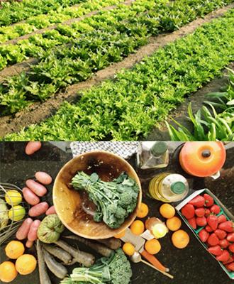 倡导安心健康的美食生活